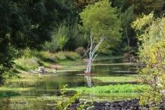 Arbre milieu d'une riviere (1 sur 1)002