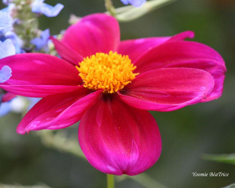 Photos-fleurs